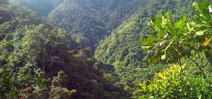 choco-rainforest-photo