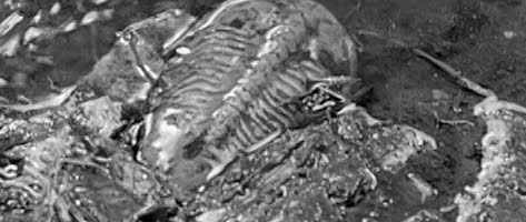 A trilobite found in Godzilla's wake.