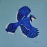 BlueJayy