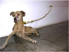 Guillermo Vargas Jiménez, also known as Habacuc, exhibited an emaciated dog in a gallery in Nicaragua in 2007.